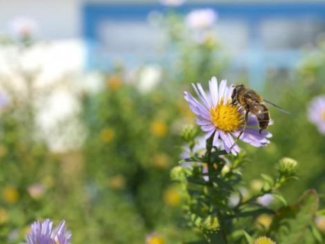 Összefogtak a természetvédők, a méhészek és a vadászok