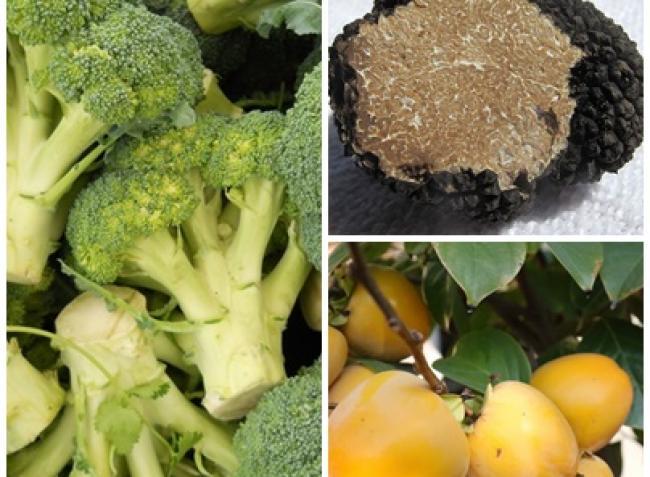Segítünk, ha datolyaszilvát, szarvasgombát vagy brokkolit termesztenél