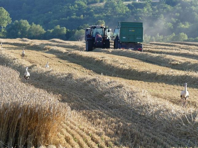 agrártámogatás