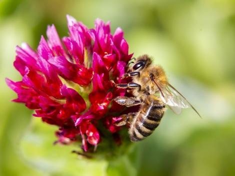 A biológiai sokféleség hozzájárul az új betegségek megjelenésének megelőzéséhez
