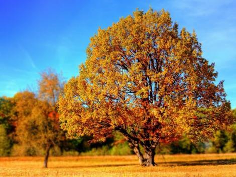 Folytatódik a csendes őszi idő