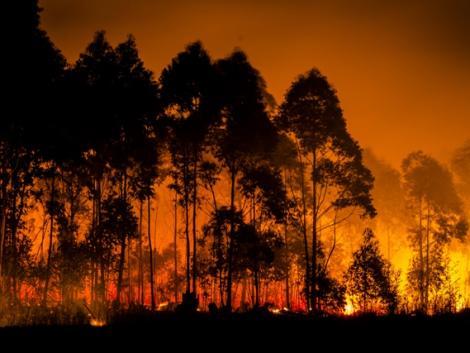 Soha nem volt annyi erdőtűz, mint tavaly