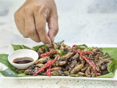 Thaiföld rovarokat fog exportálni az EU-ba
