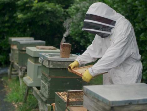 Vajon megmenti a méheket az okostechnológia?