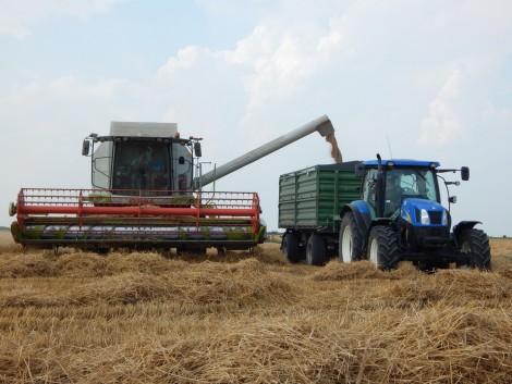 Tökéletes idő az aratáshoz