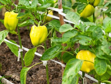 A trágyafélék kiválasztása nagy körültekintést igényel – elmondjuk, mi alapján dönts