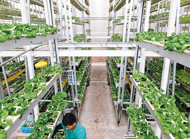 Égbe nyúló beltéri farmokkal növelni az önellátást