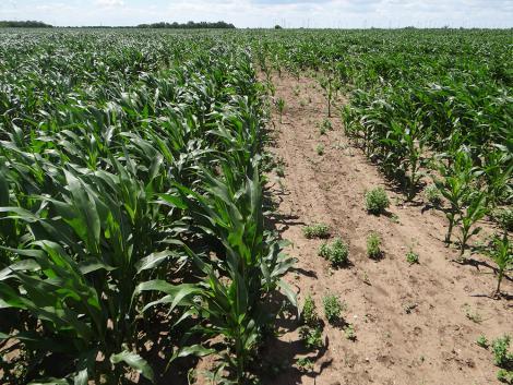 Új Force Evo: Starter hatású talajfertőtlenítő – talajfertőtlenítő hatású starter
