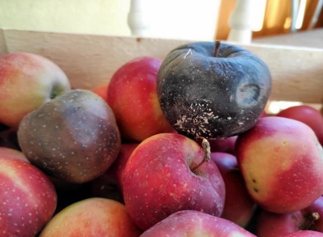 Ne vesszen kárba a leszüretelt gyümölcs és zöldség! Így előzd meg a tárolási betegségeket!