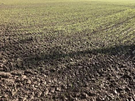 Növényvédelmi előrejelzés: Annak, aki nem végzett a vetéssel, három lehetősége van