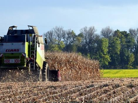 Csak lassan múlik a párás idő: meddig várhat a kukoricaaratás?
