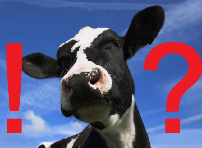 Hátborzongató az új tej, valódi állati sejtekből, de tehén nélkül! – Videó
