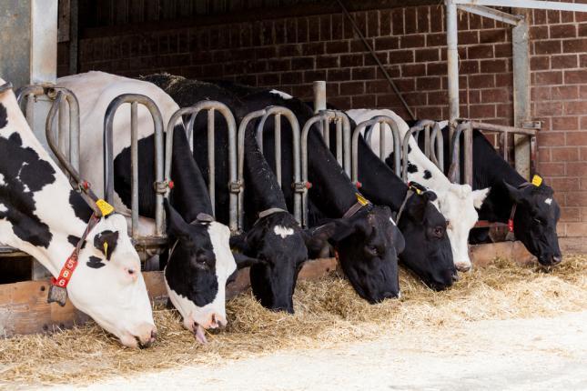 őstermelő állattenyésztés