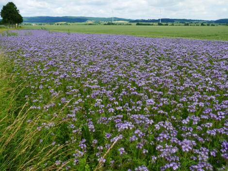 Még több zöldítést szorgalmaz a német agrárminiszter 2020 utánra