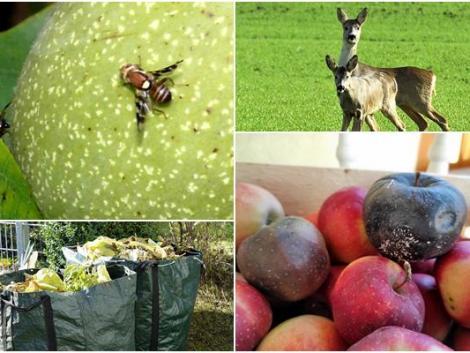 Vadriasztó módszerek, a komposztálás kérdései és a gyümölcsök téli tárolása