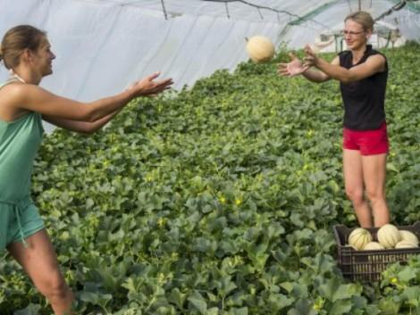 Több diák dolgozik idén a mezőgazdaságban