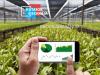 Kutatók Éjszakája: földönkívüli mezőgazdaság, stresszes növények, élelmiszerhamisítás