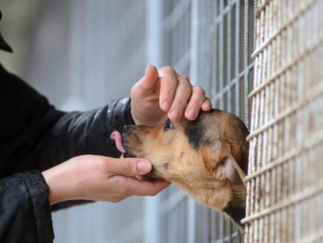 Letöltendő börtönnel sújtaná az állatkínzókat az új miniszteri biztos