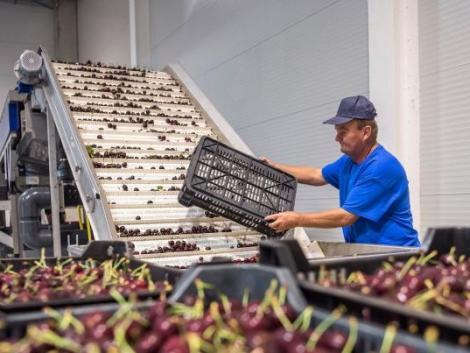 Gyümölcs- és zöldségfeldolgozó szakirányú továbbképzést indít a Szent István Egyetem