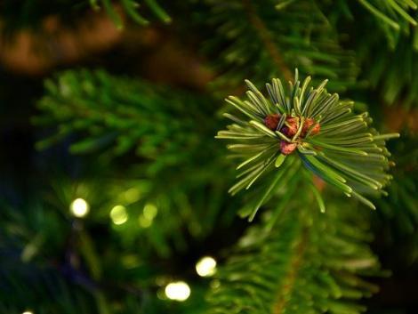 Karácsonyfa: mire számíthat idén vásárló és eladó?