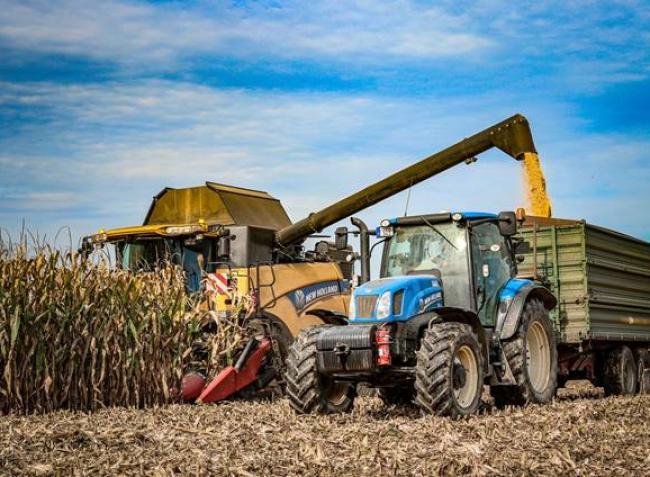 Elszabadultak a gabonaárak: nagy dilemmában a termelők