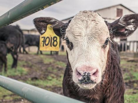Ne állatgyógyászati készítményekkel védekezzünk a koronavírus ellen!