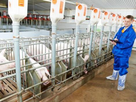 A változás elkerülhetetlen: meghódítják az állattenyésztést a döntéstámogató rendszerek