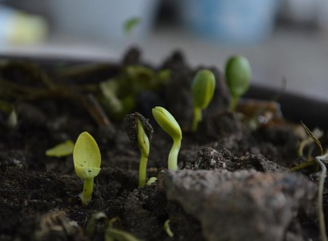 Fordulópont a mezőgazdaságban! A saját magát öntöző talaj