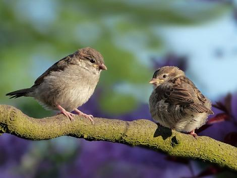 Csökkent az ózonszennyezés, 1,5 millió madár menekült meg