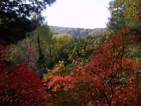 Tudjuk, hogy védeni kell az erdőt, de azt is, hogy miért olyan fontos ez az emberiség számára?