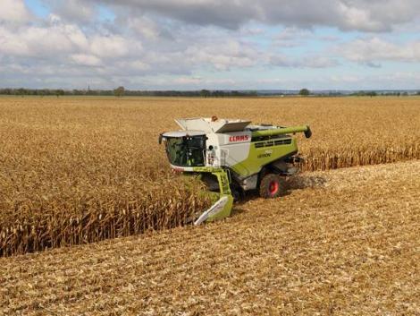 Történelmi rekord Magyarországon: 8,3 millió tonna kukorica termett