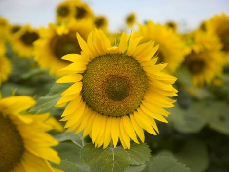 Mi már tudjuk, mit termeszt jövő nyáron
