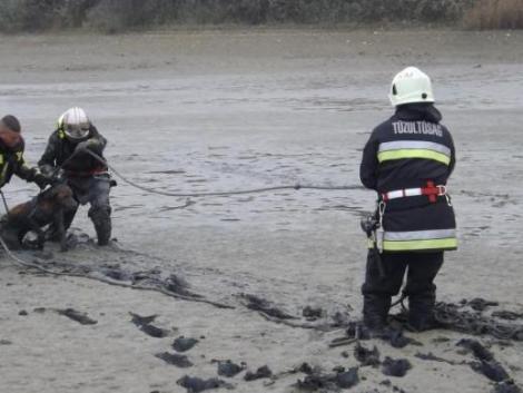 Iszapba ragadt házikedvencet mentettek a tűzoltók