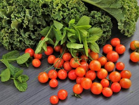 Egész évben friss zöldségek érkeznek egy hazai startup beltéri farmjáról