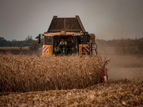 Kiemelkedő kukoricatermés egy nehéz évben? Mondja el a fiatal gazda, hogyan sikerült!