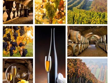 Badacsonyi borász nyerte el az Év Bortermelője címet