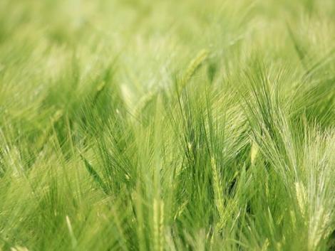 Rengeteg új támogatásra számíthat az agrárium 2021-ben