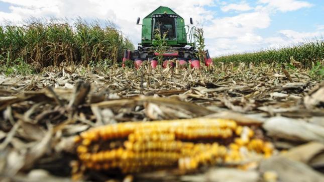 kukorica aratás