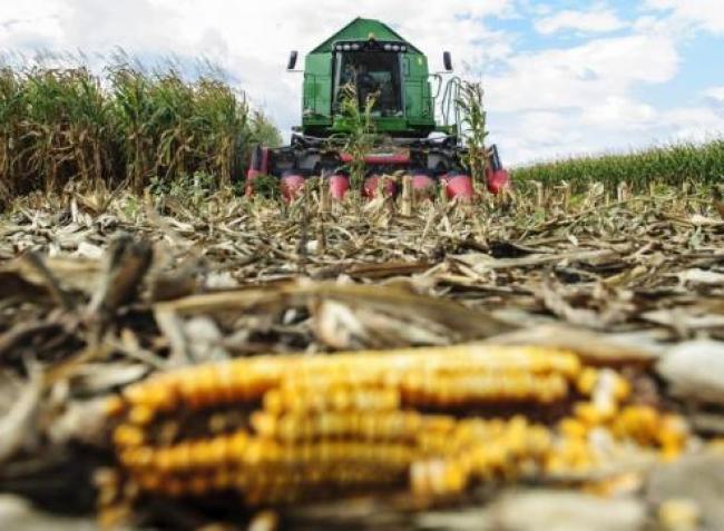 Átrendeződik a terménypiac: a növekvő kínai kereslet borít mindent