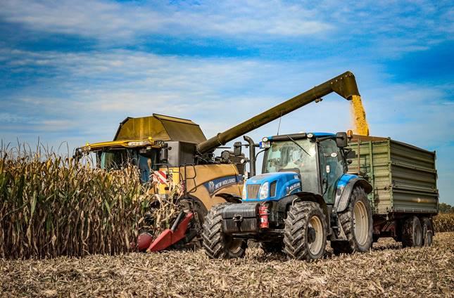 kukorica takarmány