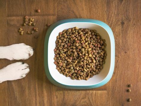 Szalmonellával fertőzött kutyaeledelt hívtak vissza