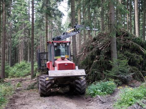 Agrárerdészeti online szakmai műhelynapot szervez a NAK
