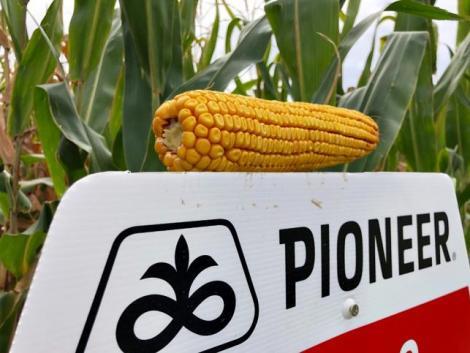 A Corteva bemutatta a Pioneer vetőmag új arculatát