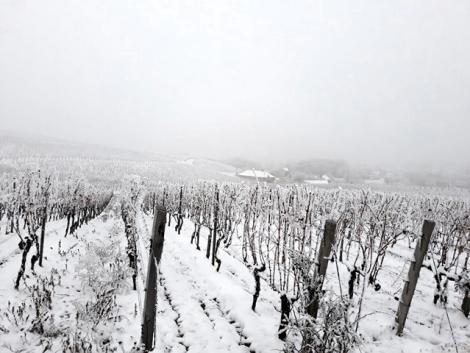 Az almafát télen is metszhetjük – téli tennivalók a gyümölcsösben és a szőlőben