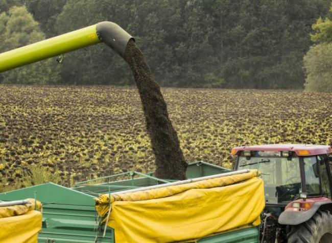 Napraforgó: érdemes még idén eladni a termést vagy megéri várni vele?