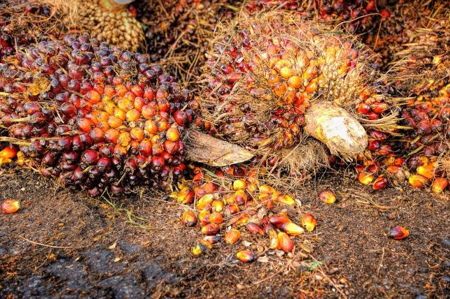 pálmaolaj a napraforgó helyettesítője