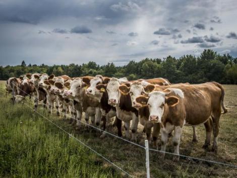 Csökkentené az ammónia-kibocsátást a mezőgazdaságban az agrártárca