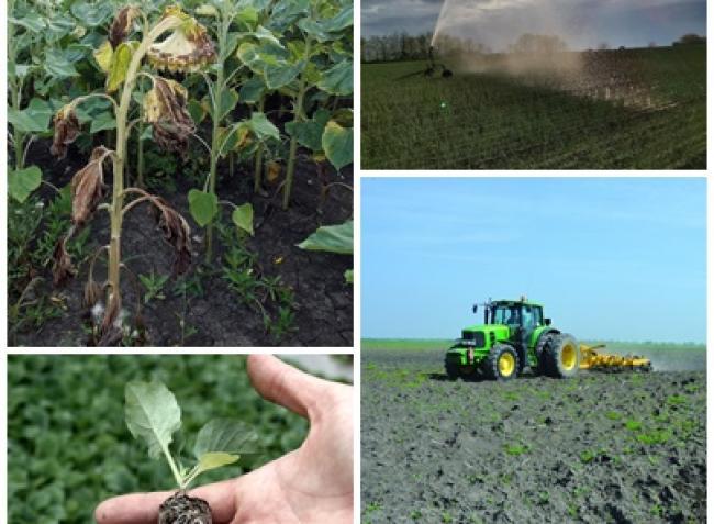 Gyümölcsfavédelem, szarvasgomba-termesztés és pusztuló diófák – 2020 mezőgazdasági szakcikkei