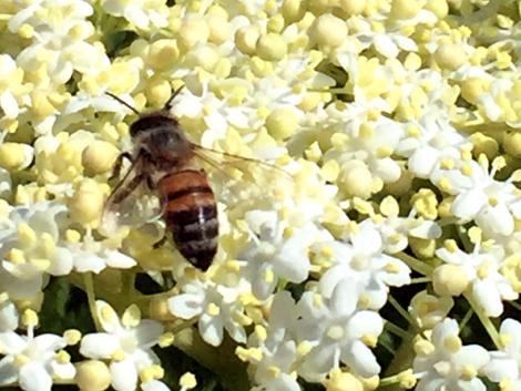 Gyomnövények inváziója, terménykárosító rovarok, elszaporodó mezei pockok – mit tehetünk ellenük?