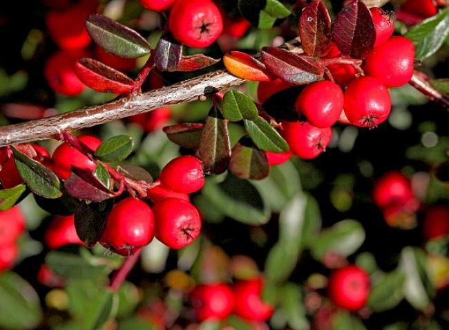 10 pénztárcabarát növény – így neveljük, így szaporítsuk
